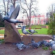 Ils doivent se cacher pour nourrir les pigeons