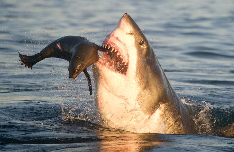 """( صورة و مشهد) : """"لكل واحد صاحبه في البر و البحر..."""" 20111114PHOWWW00519"""