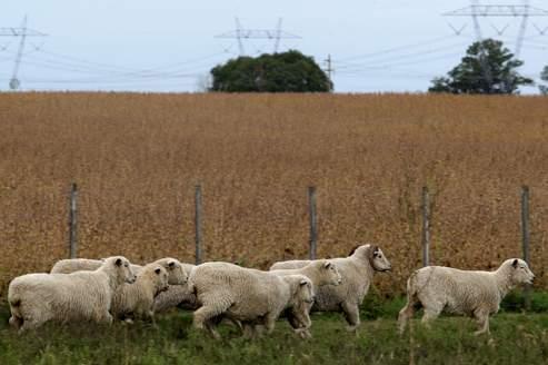 Les terres d'Amérique Latine suscitent les convoitises