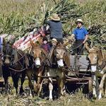 Les amish refusent le progrès et vivent à l'écart de la société américaine.