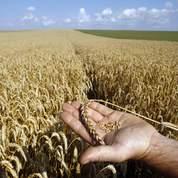 Agriculture: la liberté de semer sous pression