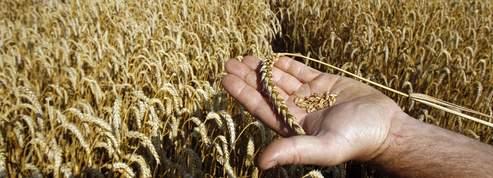 La liberté de culture des agriculteurs sous pression