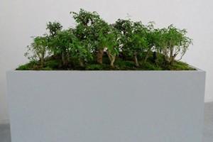 Suma est une structure en bois, avec une végétation diverse et un dispositif sonore. (Cécile Beau)