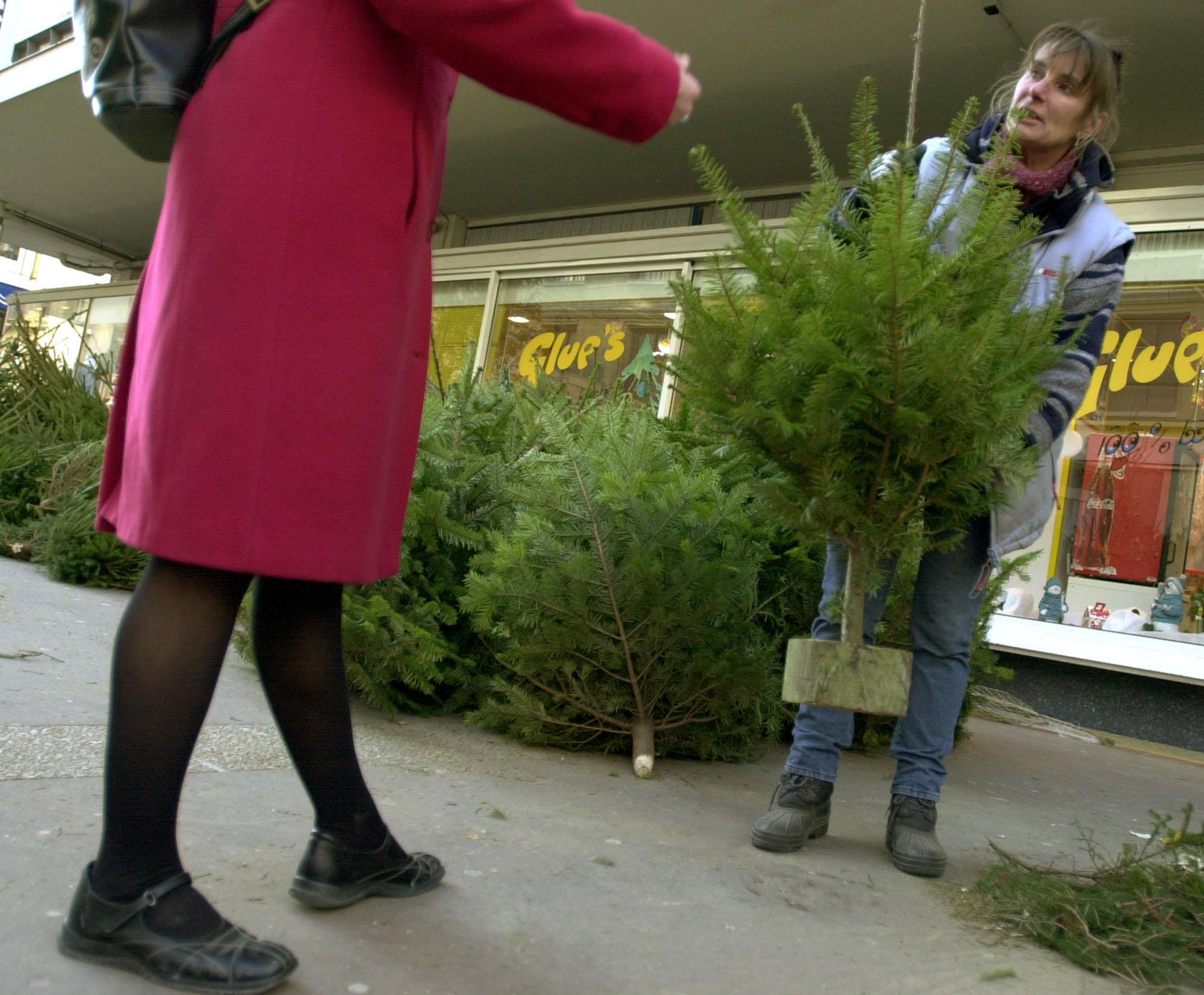 Le sapin de Noël du Canada ne séduit plus autant qu'avant
