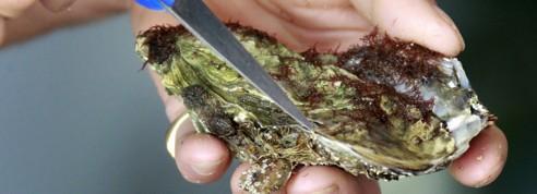 En Chine, même les huîtres risquent la contrefaçon
