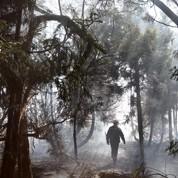 Réunion : la biodiversité menacée par le feu