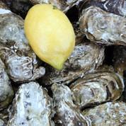 Les huîtres de nouveau décimées par l'herpès