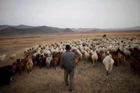 La Bourse mongole vedette de l'année 2011
