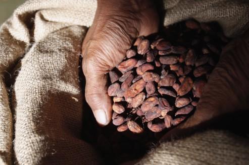 Le risque de pénurie s'accentue sur le cacao