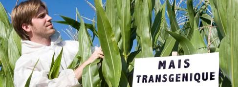 La délicate cohabitation entre OGM et «sans-OGM»