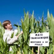 Délicate cohabitation entre OGM et sans-OGM