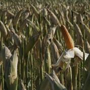OGM : bras de fer entre les agriculteurs et NKM