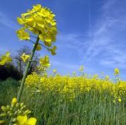 Biocarburants : une facture élévée