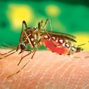 Des satellites pour traquer la dengue