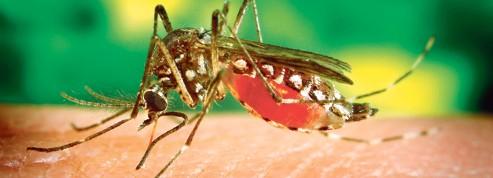 Des satellites pour traquer les moustiques de la dengue