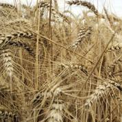 Pesticides: comment sont évalués les risques