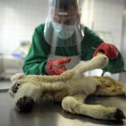 Les élevages français en proie à un nouveau virus