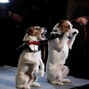 The Artist :Uggie remporte le Collier d'Or