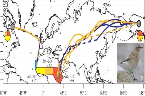 Un oiseau de 25 g capable de parcourir 30.000 km
