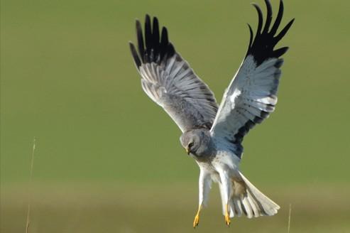 Les oiseaux franciliens déchantent