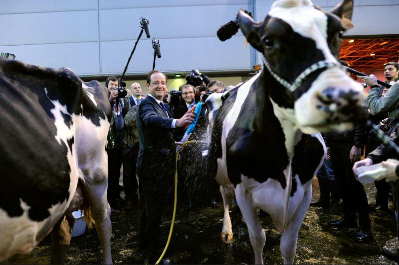 <b>Brossée</b><br /> Pas de doutes, pour gagner une élection présidentielle, il faut mettre la main à la pâte. Dans sa course effrénée à la popularité, le candidat socialiste François Hollande s'est attelé au nettoyage d'une vache lors de sa visite au Salon de l'agriculture. Le candidat à l'Élysée a affirmé qu'il n'était pas «à la recherche d'un record» et que «ce n'était pas au nombre d'heures passées au Salon de l'Agriculture que se faisait la confiance, que se donnait un suffrage.» La visite, qui aura tout de même duré 10 heures, comprenait un petit déjeuner avec des agriculteurs. Un autre Corrézien, Jacques Chirac, était coutumier de ces longues visites.