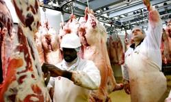 Les règles vétérinaires sont respectées dans les abattoirs halal. Crédits photo : Fanny Tondre