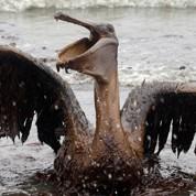 Marée noire : BP règle une partie de la facture