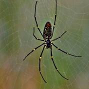 Des cordes de violons en toiles d'araignées