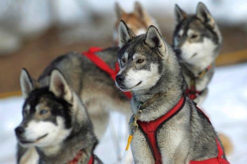 Dans le domaine du chien, l'ADN est également utilisé dans de nombreuses applications.