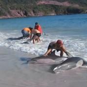 Des dauphins sauvés par des vacanciers