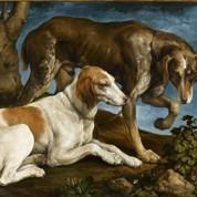 Bêtes et beaux à la fois