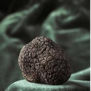 Truffes: le terroir ne fait pas tout l'arôme