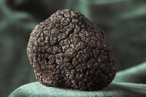 Malgré de grandes avancées scientifiques, la truffe est loin d'avoir dévoilé tous ses secrets.