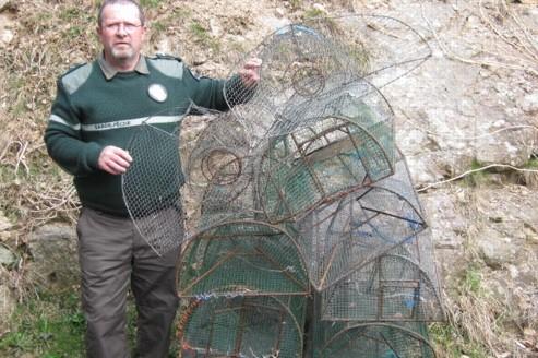 Trafic de grenouilles dans les Vosges