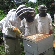 Abeilles: une nouvelle étude incrimine les pesticides