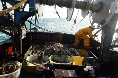 La pêche des petits poissons sur la sellette