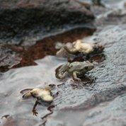 Les champignons pathogènes attaquent