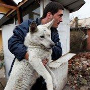 La capitale bulgare livrée à dix mille chiens errants