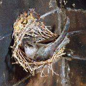La preuve des ravages du DDT sur les oiseaux