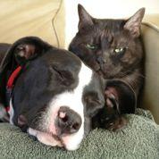 76 colliers pour chien et chat retirés de la vente