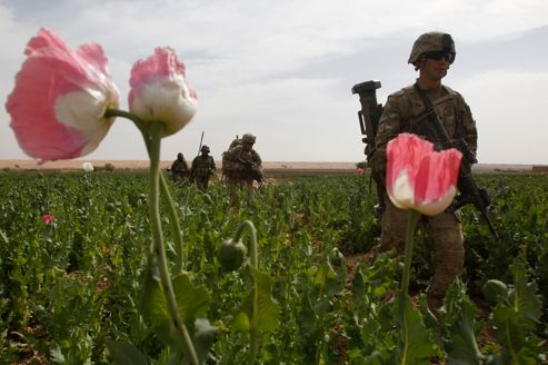 Les talibans ne veulent pas perdre la guerre du pavot