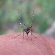 Piqûres d'insectes: des traitements peu utiles