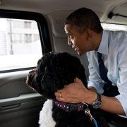 Barack Obama et son chien Bo dans la limousine présidentielle.
