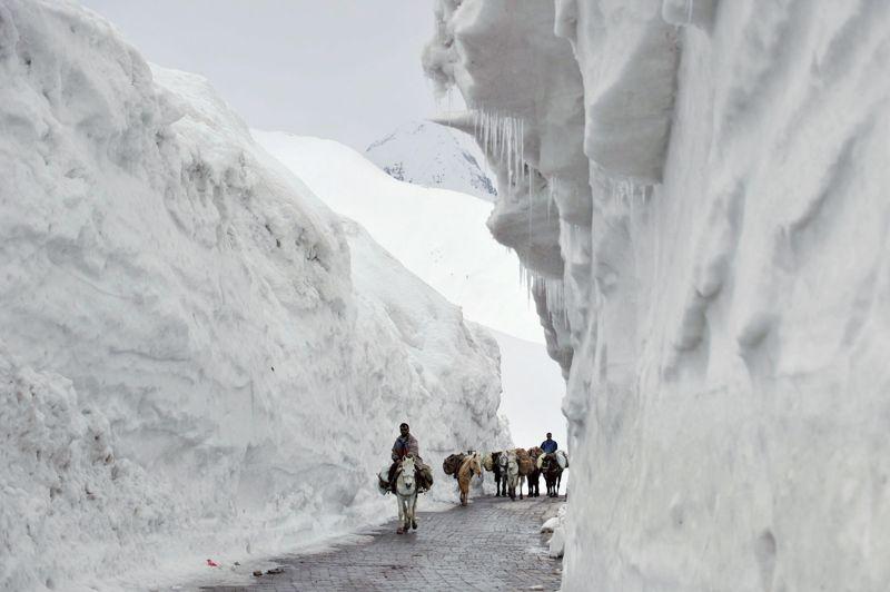 <strong>CONGÈRE AU SOMMET </strong>- On n'imagine pas l'exploit que représente le déblaiement de cette route, longue de 434 kilomètres et seul point de passage entre la vallée verdoyante du Cachemire et les hauteurs rocailleuses du Ladakh, au nord de l'Inde. Les chutes de neige ayant été particulièrement précoces et abondantes cette année dans le grand Himalaya, elle avait dû être fermée dès le 1er décembre et n'a pu rouvrir que le 25 avril dernier, jour où a été prise cette photo. Mais l'on n'y croise pas que des mules ou des yaks: les touristes l'empruntent également en masse pour visiter le Ladakh, haut lieu de la spiritualité bouddhiste, au climat aride et à la population très accueillante, où les villages sont parfois perchés à plus de 6000 mètres d'altitude!