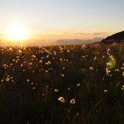 Alpes: le réchauffement menace la flore