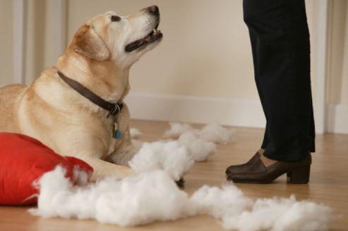 Il est souvent indispensable de s'assurer contre les éventuels dégâts causés par son animal de compagnie.