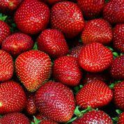 La fraise française s'est fait attendre