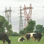 EDF accusée d'infecter des vaches laitières
