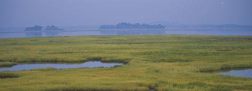 Diminution de la surface des zones humides dans le monde
