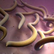 Lyme: arthrite et troubles neurologiques